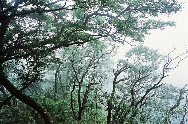 "Director Ke Chin-Yuan's ""eco-documentary"" showcases the breathtaking beauty of Taiwan's mountains, documents the rise and fall of Taiwanese forestry,"