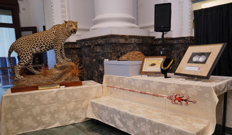 A taxidermied leopard and the shell of a sea turtle.