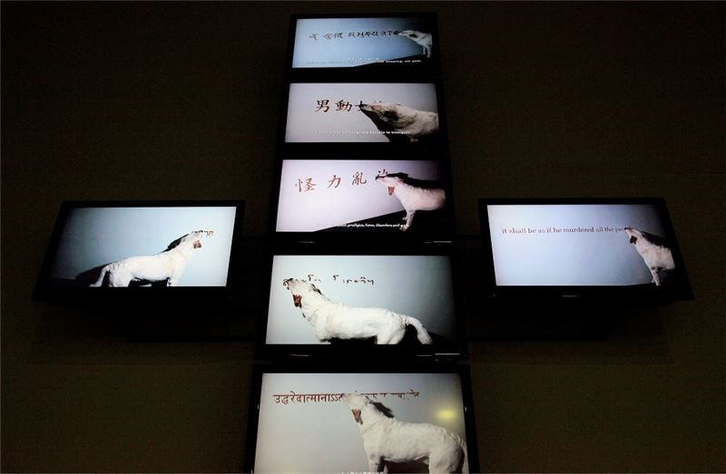 PENG Hung-Chih〈Canine Monk〉2004-2008 New media art Dimensions variable