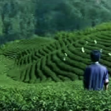 《鬪茶》(電影)