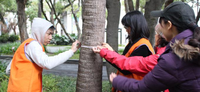 測量樹幹直徑