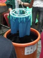浸染-圓形染缸