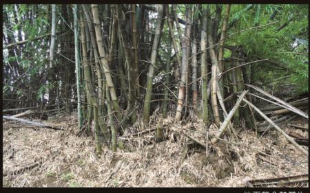 榫接材料-刺竹
