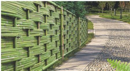 中高籬-緊密式竹籬