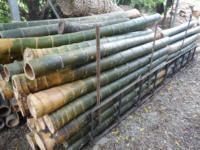竹材與處理