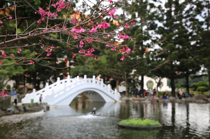 20190305雲漢池 紅櫻花與白拱橋