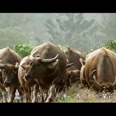 李雙澤〈美麗島〉音樂影片,歌詞改編自陳秀喜的詩〈臺灣〉(來源/野火樂集於Youtube公開分享之影片)