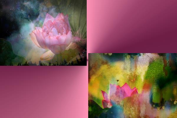 給我一朵禪的花—金露攝影展