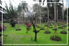 中山公園四周種植梅花