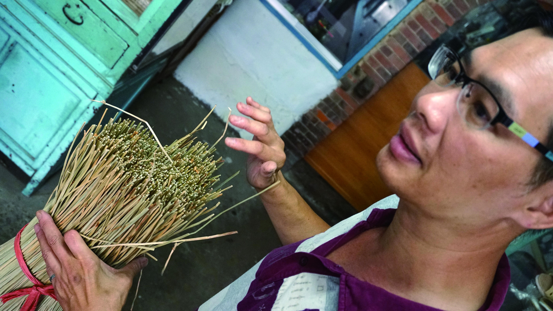 圖9苑裡特產的三角藺草,氣孔和內部細胞間腔較一般鹼草大,呈半開狀,具強力的吸濕及除臭效果。.JPG