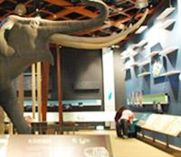 自然史廳-冰期動物
