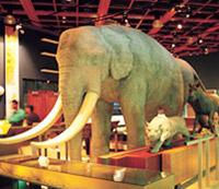 自然史廳展示裝置-淮河象