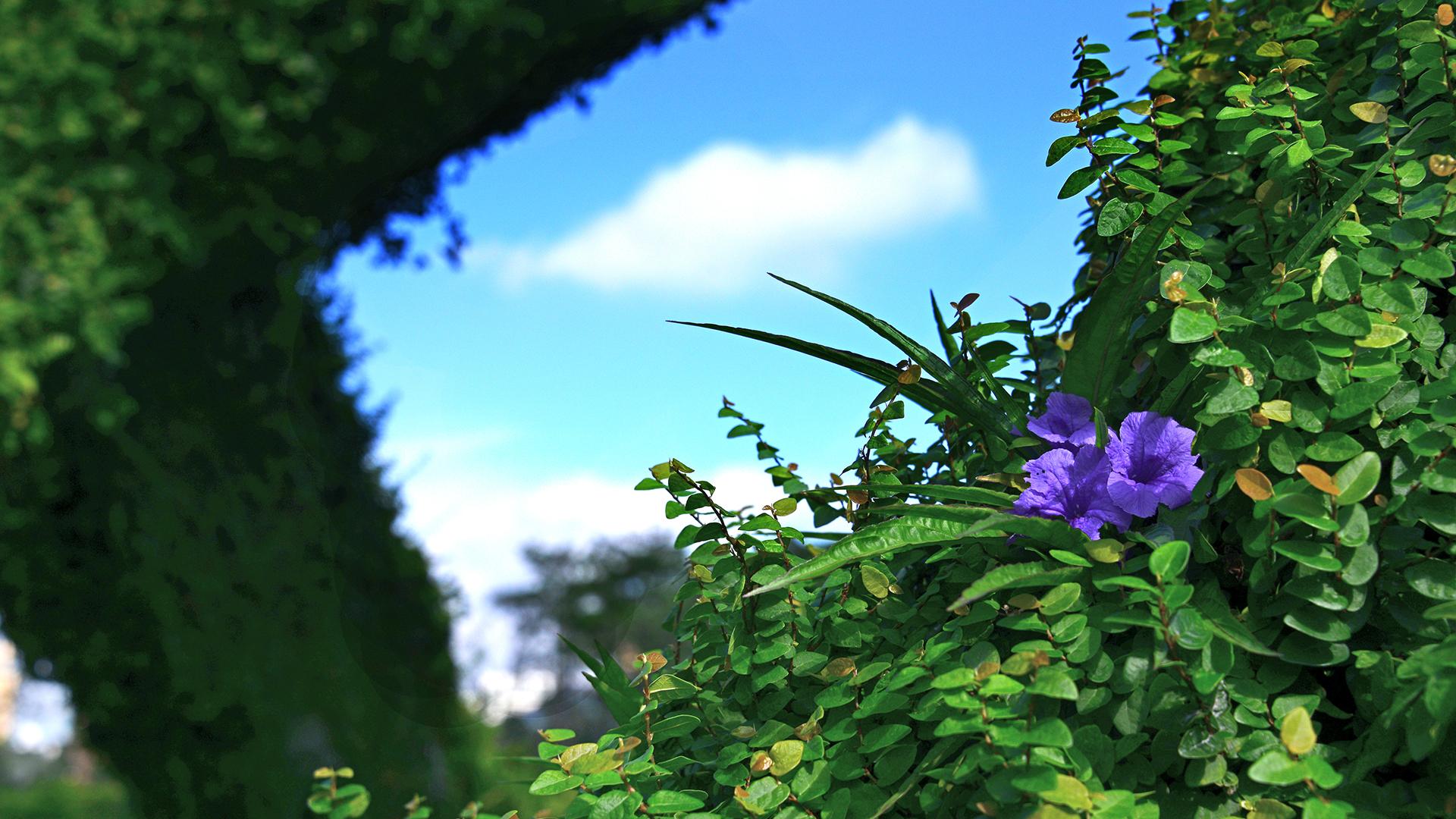 紫花蘆利草-1920-X-1080.jpg