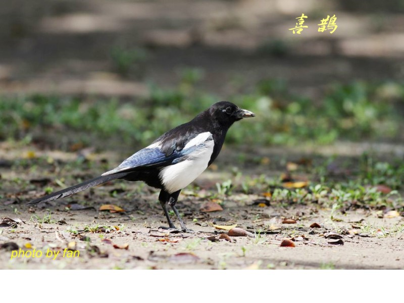 Check out the magpies.