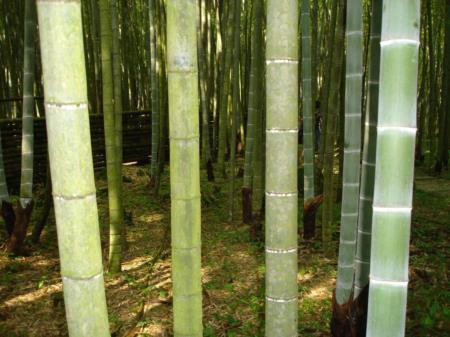 02一年生-四年生的孟宗竹生態