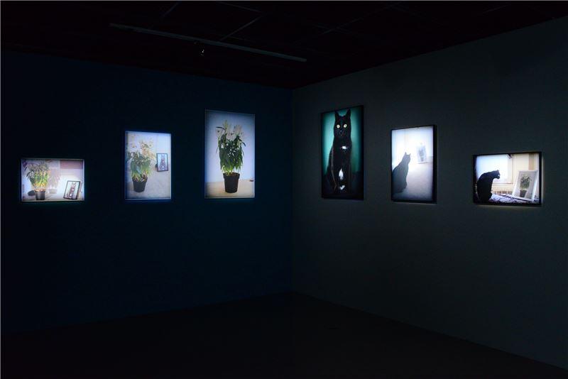 王祺,〈貓的花與花的貓〉,2014,攝影,尺寸依現場而定。藝術家自藏。