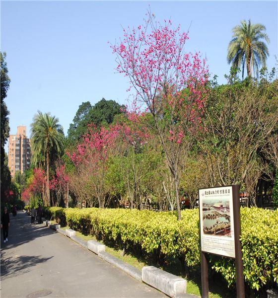 國父紀念館懷舊鐵道(八重櫻步道)照片