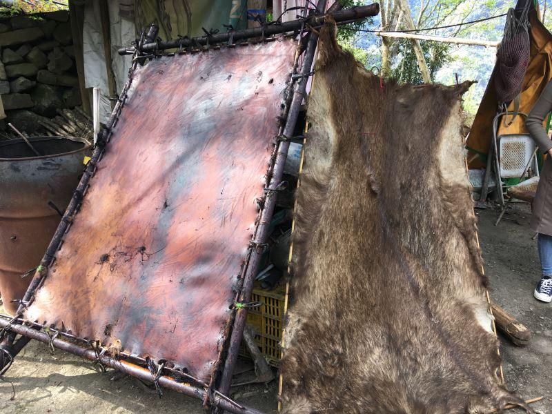 將獸皮四邊穿洞綁於框架上的過程稱為「張皮」,而在張皮後讓日光曝曬可防止皮革腐壞,是鞣皮前的重要過程。