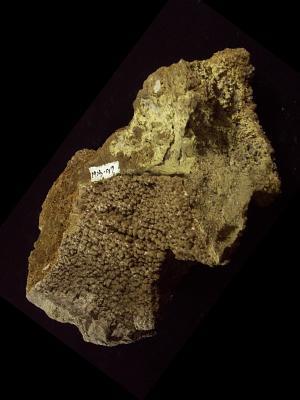 Hokutolite (Batu Beitou)