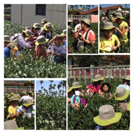2013兒童工藝夏令營-來到「茶的王國」~鹿谷鄉體驗採茶
