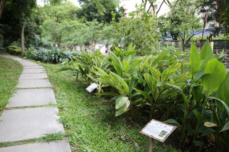 可透過植物解說牌認識植物
