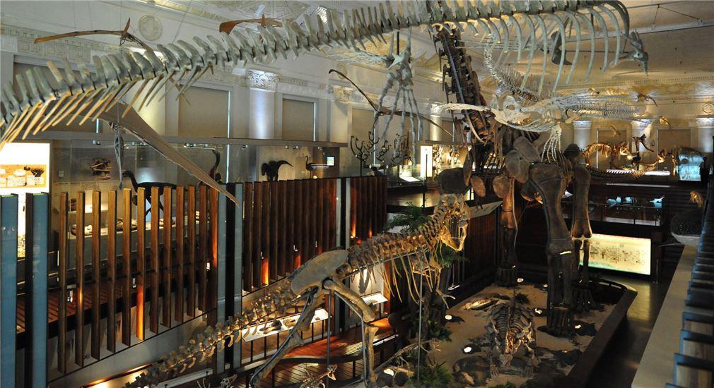 古生物大展-生命的史詩與演化共舞展區