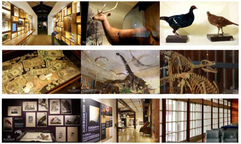圖6臺博館釋出臺灣特有種、金融、鐵道、古生物等多種主題視訊背景美圖