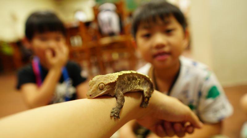 現代小恐龍-爬蟲動物大觀園