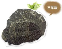 古生物大展-三葉蟲化石