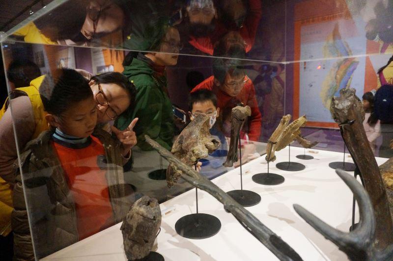 圖4古生物化石吸引民眾目光