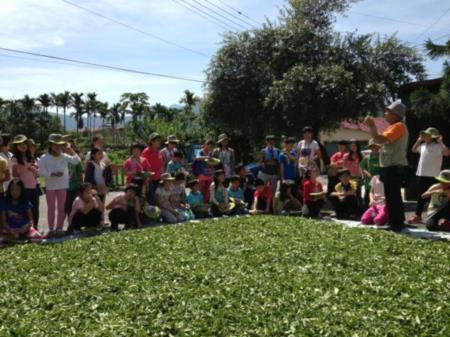 2013兒童工藝夏令營-認識茶葉的製作過程