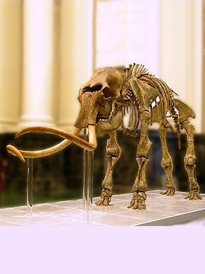 Fosil Mammoth Wooly: Harta di bawah Dataran Es