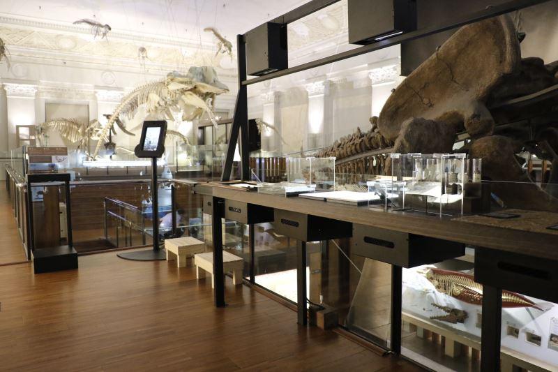 博物館驚奇趣-古生物學家的座位
