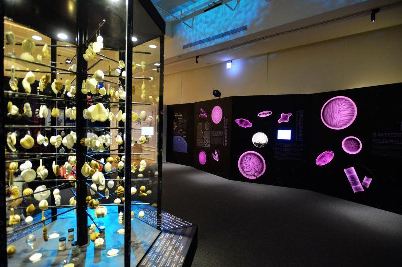 圖4微美幻境特展展出姿態各異的有孔蟲微化石