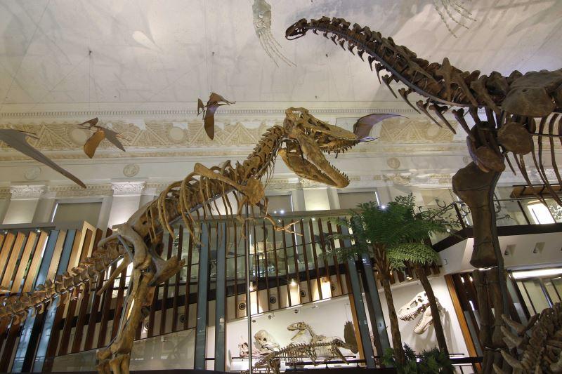 圖5臺博土銀展示館及南門館古生物展展出動物化石及複製品