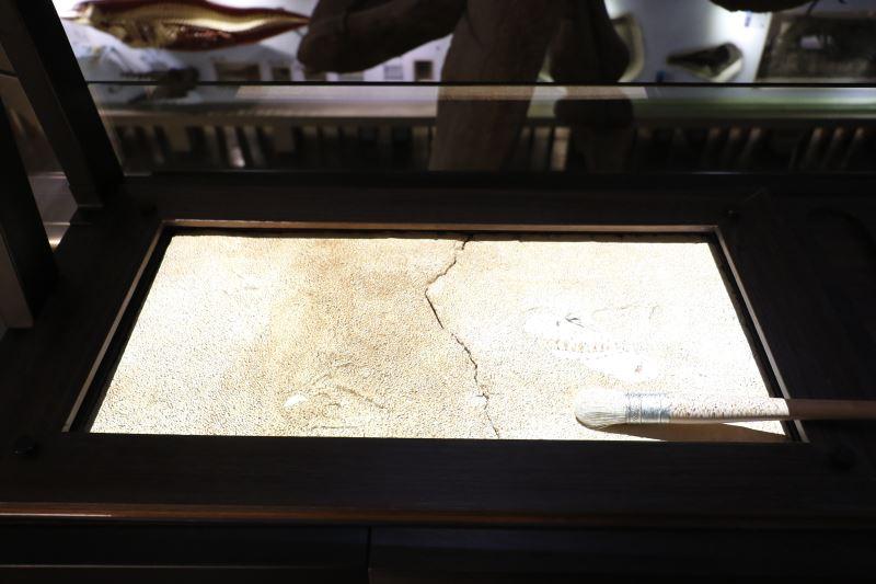 博物館驚奇趣-化石清修區