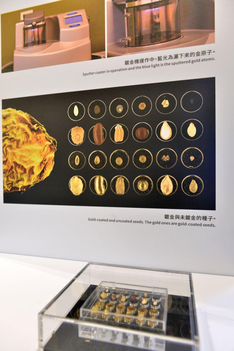 種子美術館特展_鍍金與未鍍金的種子模型