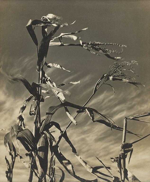 秦凱〈風(動)〉1939,紙質,29.2x24cm_c國家攝影文化中心