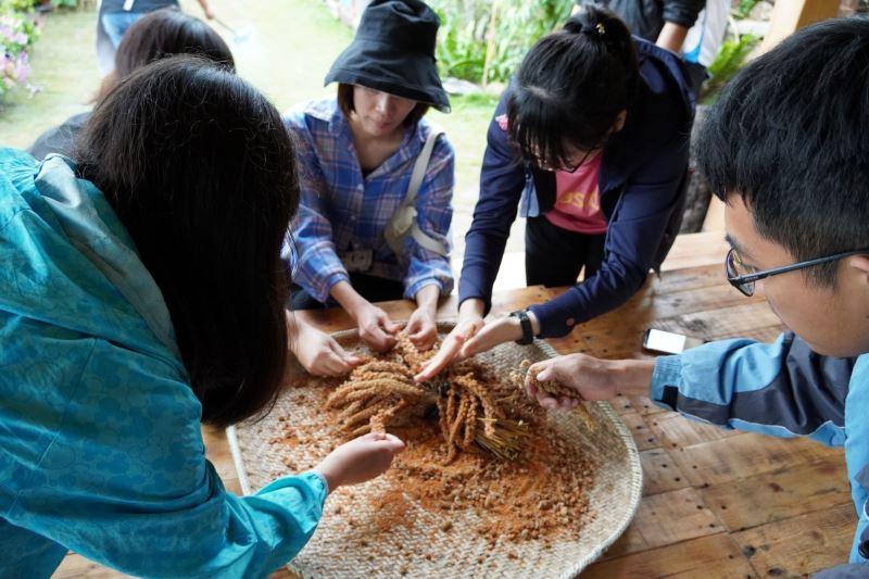 25日史前館在崁頂部落辦理我們苧在這藜的生活活動,聽長輩敘說在部落工作延續族群文化的方式與初心,體驗紅藜田旁手忙腳亂中體驗小米脫殼與搗小米