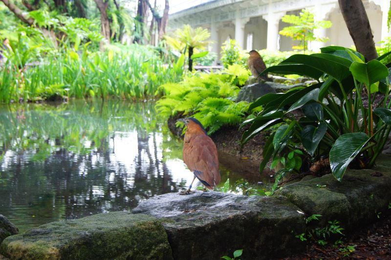 熱帶雨林園區(多元公園景觀)