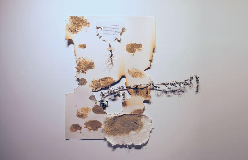 """張欣,〈生態寓言:26°48'44.0N_100°08'15.3""""E〉,2018,泥土、火、植物、紙。藝術家提供"""