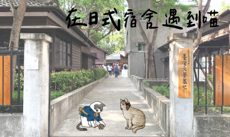 臺灣文學基地518博物館日推出「在日式宿舍遇到喵」活動