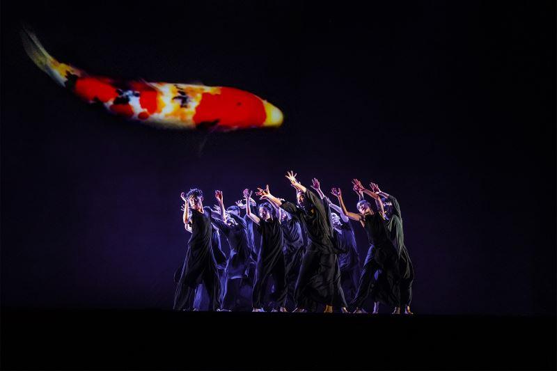 在《十三聲》中,光影投射出的的錦鯉優游在舞台與螢幕,使舞作增添了故事性,可說是影像設計與編導共同創作的最佳案例。(劉振祥攝)