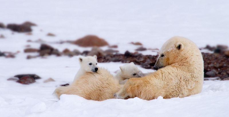 圖5影望精選影片-「北極熊流亡記」劇照