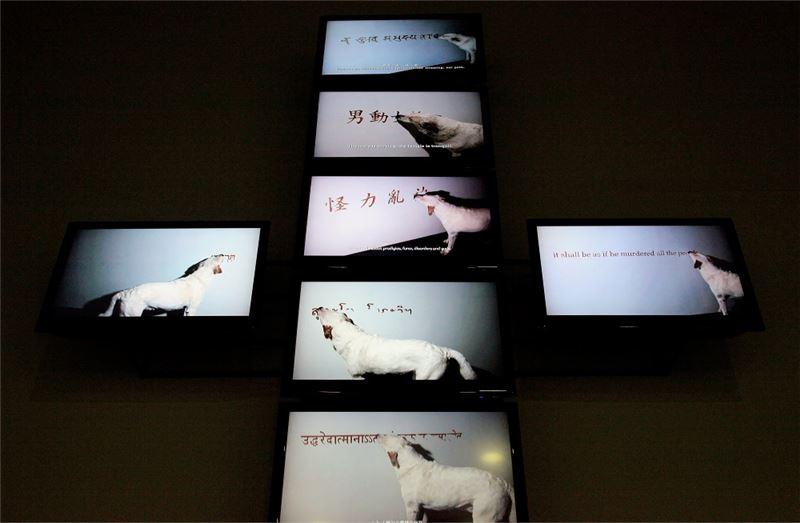 彭泓智〈犬僧〉2004-2008 新媒體藝術 尺寸依展出場地調整