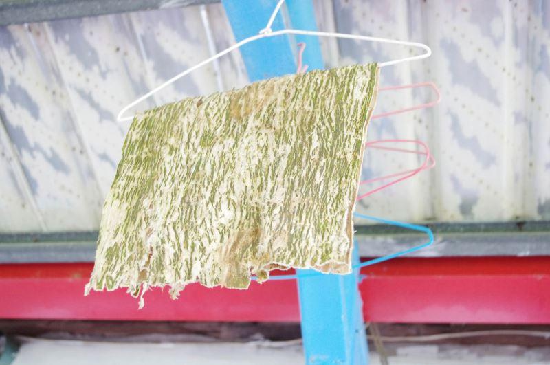 敲打完樹皮衣,清洗曬乾後即可進行縫製。
