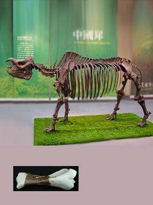 Spesies Fosil Badak: Taiwan juga memiliki Badak