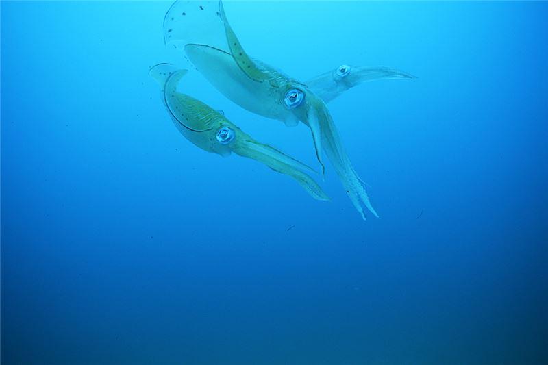 每年四月到九月,是俗稱「軟絲仔」迴游到台灣東北角海域產卵的季節;近年,由於颱風及人為因素,軟絲仔的產卵環境,已遭嚴重破壞。海洋環保工作者郭道仁,帶領了保育團隊,開始在台灣東北角獨力為軟絲仔建造產卵魚礁。他們本來只想建立提供休閒潛水的海底觀光,不料,以自創土法打造的人工「產房」,深受軟絲仔喜愛,每到產卵季節,魚礁上結實纍纍,成為一座結合了復育、研究、教育、觀光的海底社區。然而,公部門並未加以支持,保育人士結合單薄之力,每年反覆重建軟絲產房。2006年,日本海洋生態學者與美國人工魚礁專家,實地觀察之後,高度肯定此一成果,並計畫在日本海域,複製此一魚礁產房……。