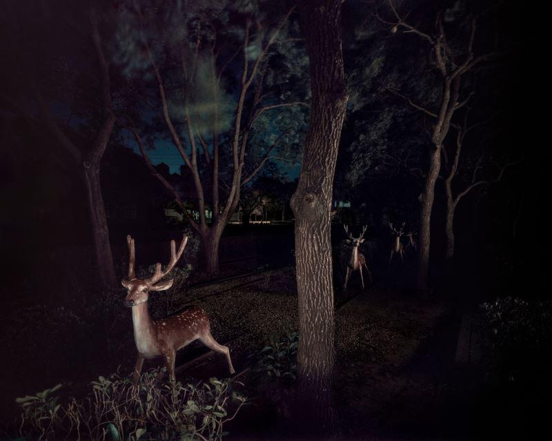 彭一航,〈幽靈公園-梅花鹿〉,2020,攝影,100_x_125_公分。藝術家提供。