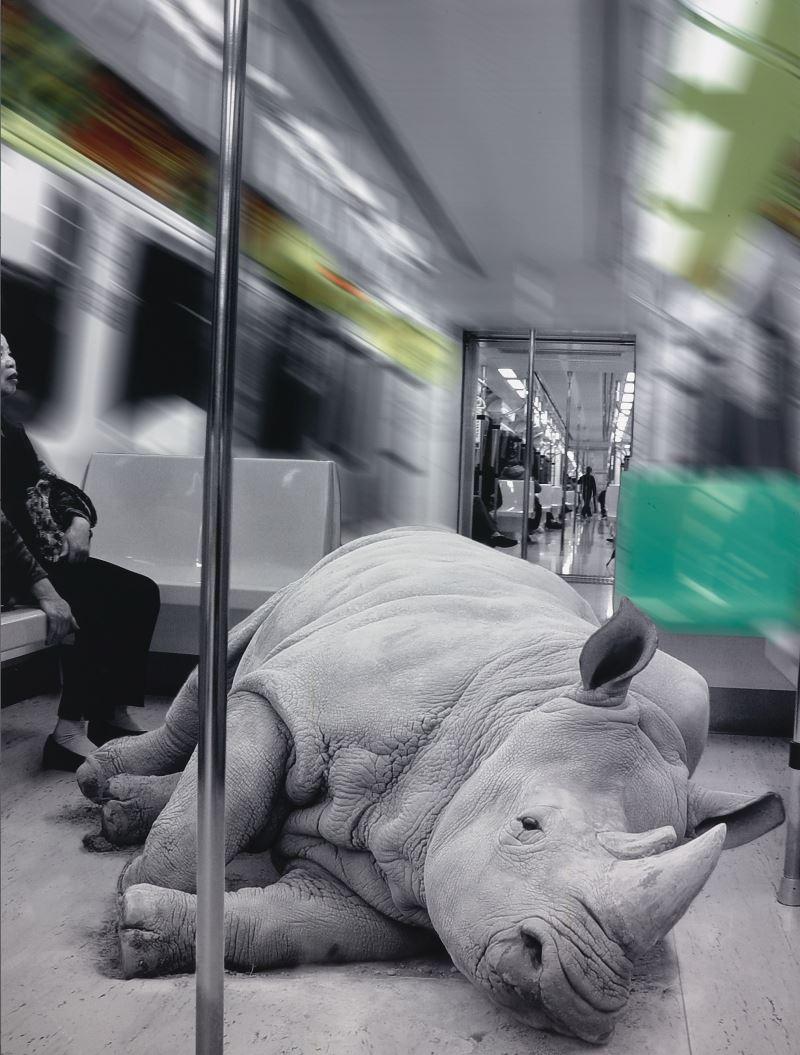 黃建樺〈走獸–犀〉2006__數位攝影、頂級光面相紙_160_×_120_cm__國立臺灣美術館典藏
